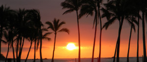 one stop place for info about activities in hawaii